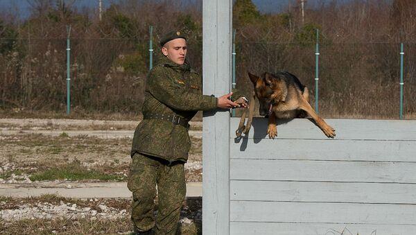Кинологи ЮВО провели комплексную проверку функциональных навыков караульных служебных собак в Абхазии - Sputnik Аҧсны