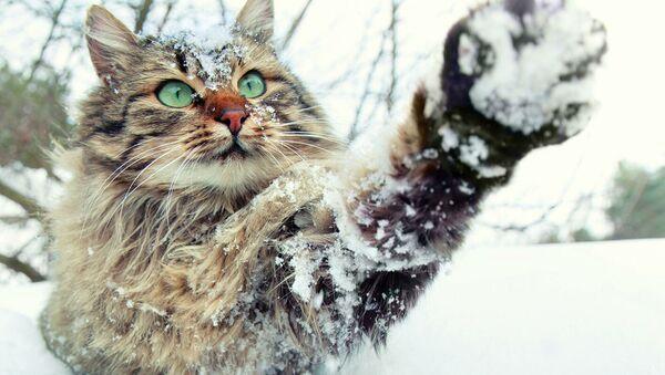 Кошка играет в снегу - Sputnik Абхазия