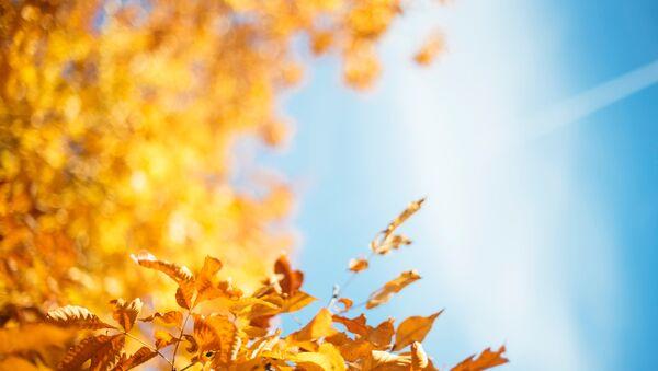 Осенний лес  - Sputnik Абхазия
