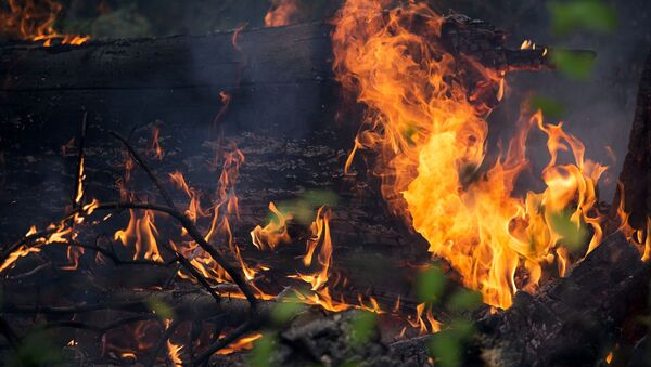 Лесные пожары - Sputnik Аҧсны
