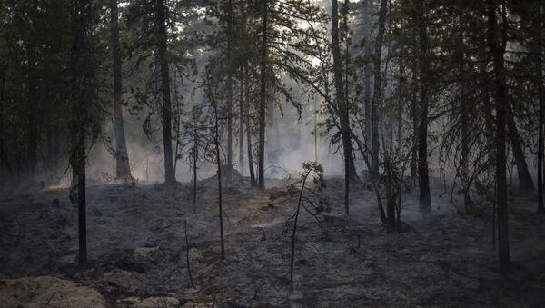 Лесной пожар - Sputnik Аҧсны