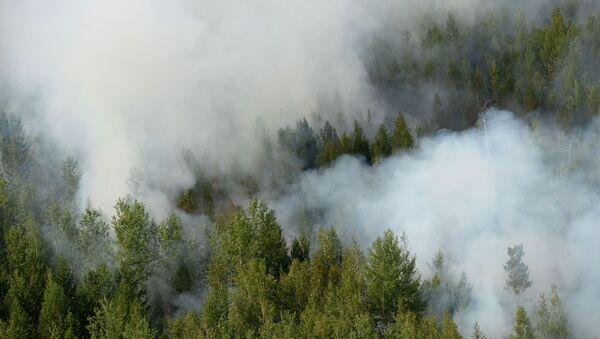 Вид на лесные пожары с вертолета, задействованного в тушении. - Sputnik Абхазия