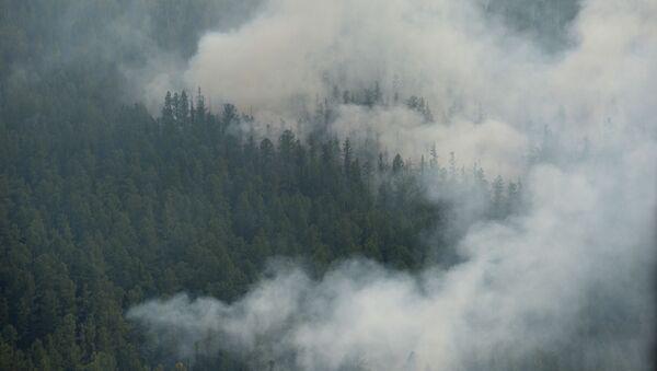 Ликвидация лесных пожаров  - Sputnik Абхазия