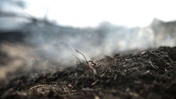 Пожар в лесу  - Sputnik Аҧсны