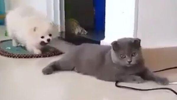 Собака тянет кота за хвост  - Sputnik Абхазия