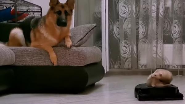 собака - Sputnik Абхазия