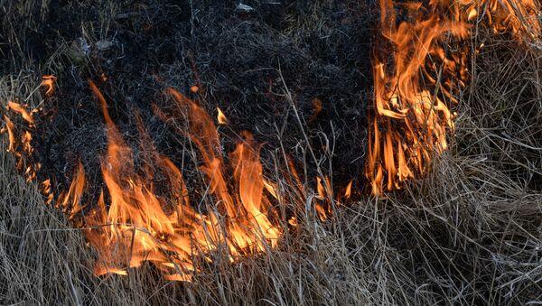 Практическая тренировка по отработке действий при возникновении лесного пожара в Новосибирской области - Sputnik Аҧсны
