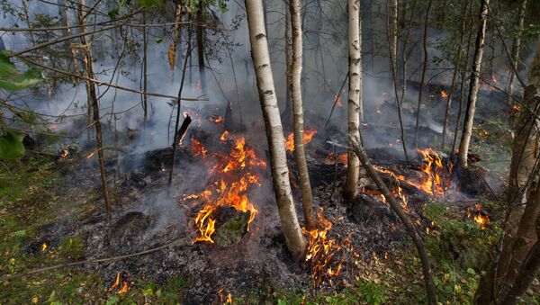 Тушение лесных пожаров в Томской области - Sputnik Аҧсны