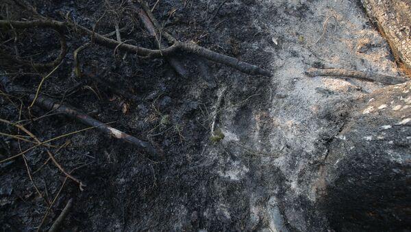 Последствия лесных пожаров  - Sputnik Абхазия