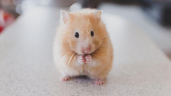 Мышь  - Sputnik Абхазия