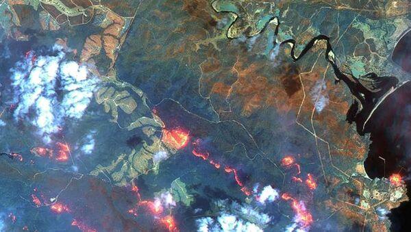 Лесные пожары - Sputnik Абхазия