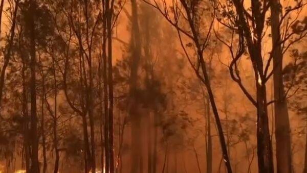 Пожары и дождь в Австралии: будет ли спасение? - Sputnik Абхазия
