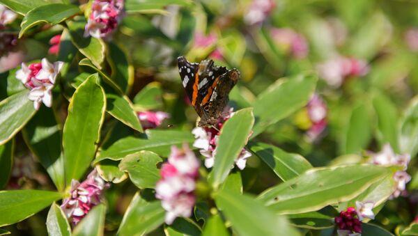 Бабочка в ботаническом саду  - Sputnik Абхазия