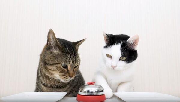 Колокол и коты - Sputnik Абхазия