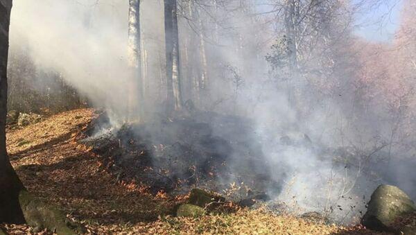 Очаги возгораний отмечены в Галском, Гагрском и Гулрыпшком районах  - Sputnik Абхазия