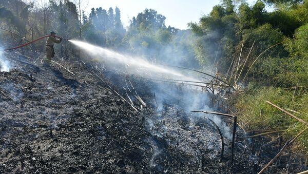 Пожар в лесу  - Sputnik Абхазия