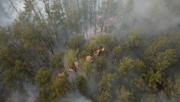 Лесной пожар в Чернобыльской зоне - Sputnik Абхазия
