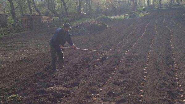 Весенне-посевные работы в высокогорном селе Псху  - Sputnik Абхазия