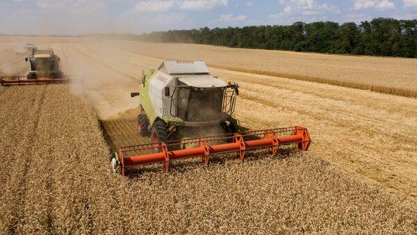 Уборка пшеницы в Краснодарском крае - Sputnik Абхазия