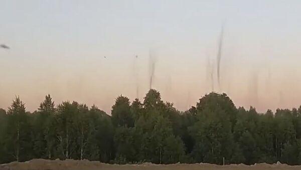 Дым без огня: рой комаров удивил пользователей Сети - Sputnik Абхазия