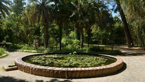 Абхазский государственный ботанический сад  - Sputnik Абхазия